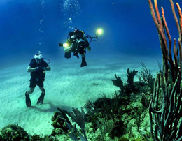 Scuba Diving at Port blair for one